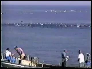 Истребление Дельфинов