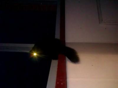 кот-светодиод