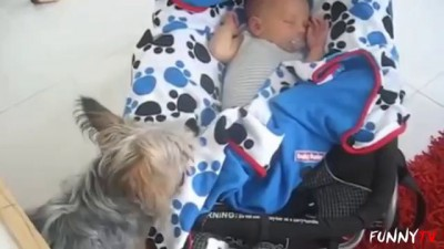 'Dogs Putting Babies to Bed' Compilation - FunnyTV