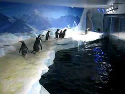 Пингвины и лазер