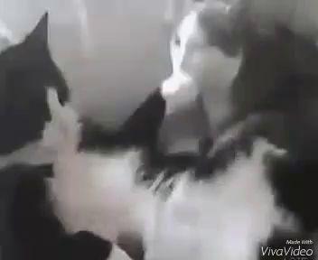 крестный отец у котов