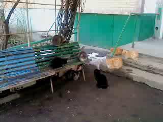 Коты собираются