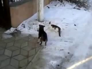 Собака переносит кота через дорогу