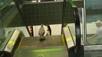 Птица на эскалаторе