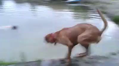 Обманул пса