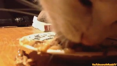Кот и вкусняшка