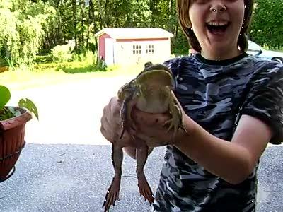 Орущая жаба