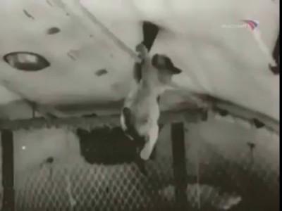 Кот и нулевая гравитация