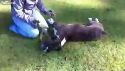 Спасение собаки