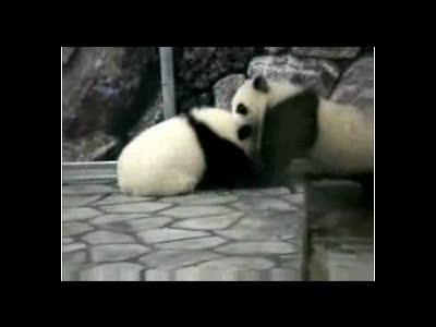 Борьба панд