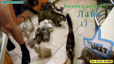 котики просят лайк;)