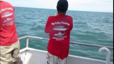 shark cape cod june 26 2015