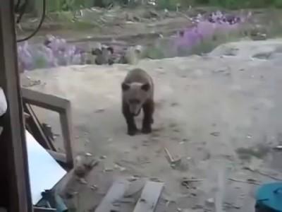 Медьведица напала на рабочих
