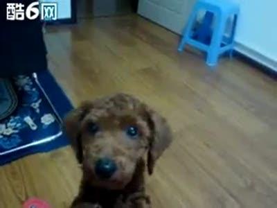 "Собака говорит ""мама"""