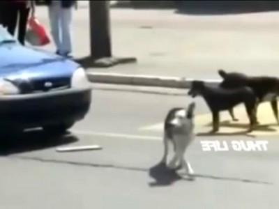 Не сигналь собаке!