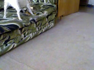 диван и пес