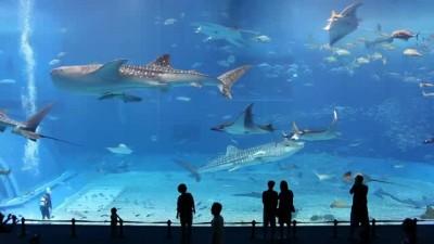 для   Nokia C7 aquarium