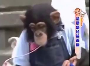 Умора обезьяна и собака переходят речку
