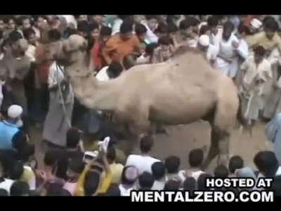верблюд напал на людей