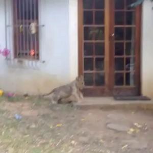 Собакен испугался львенка