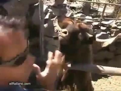 Спор с тазодрочером