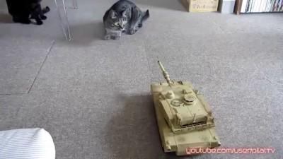 ТАНК против КОТОВ