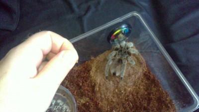 Завтрак паука