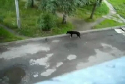 Умный кот