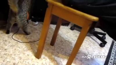 Электростатика и кот