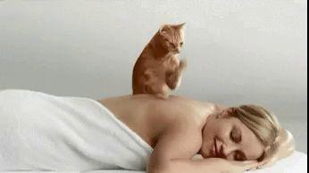 Вот что должен делать кот