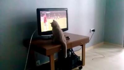 Коты любят футбол