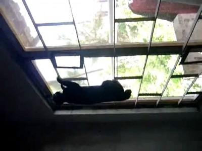 Кот - паркурщик