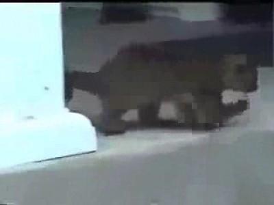Кинкажу - цветочный медведь
