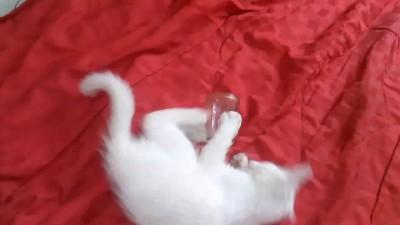 Кошка и стакан)