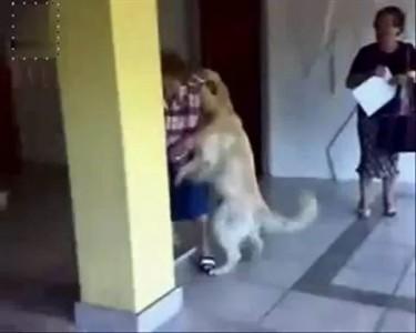 Пес - насильник