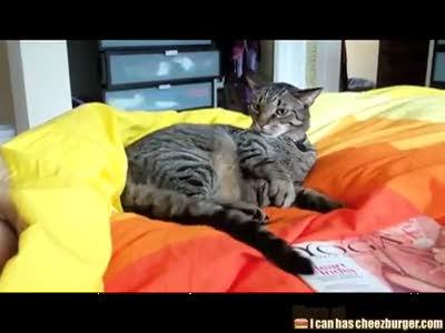 Кот против хвоста