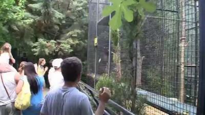 шимпанзе отжигает