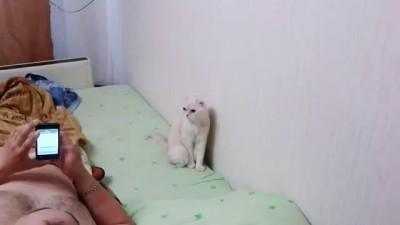 Кот - патриот.