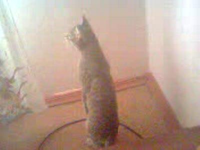 кот отжигает