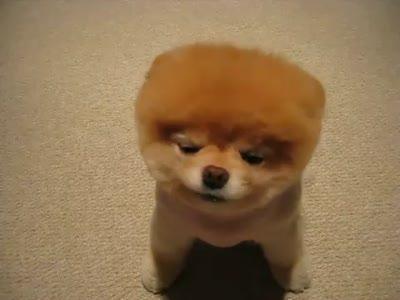 Собакоежик