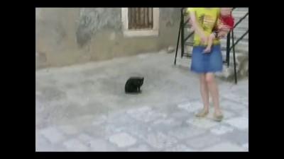Бойцовский кот