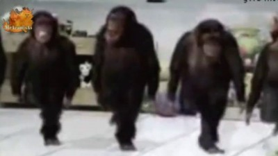 Сute animals. Осторожно, обезьяны. Макака-куа