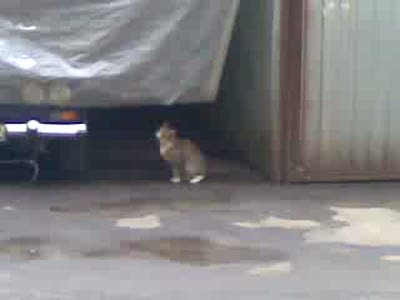 Кошка смешно мордочку трет