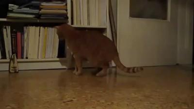 Кот дёргается от метронома!