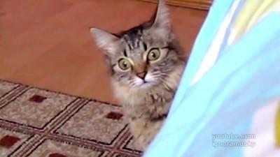 кот задумал что-то