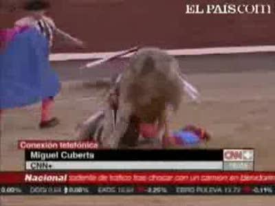 Торреро против быка