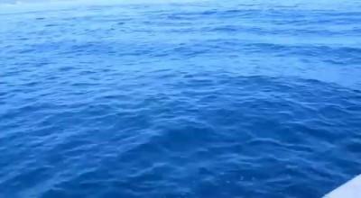 Никола Башич - Морской орган_2