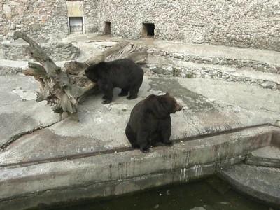 Медведи Николаев март 2014