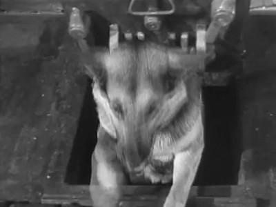 Песня из кинофильма Четыре Танкиста и Собака