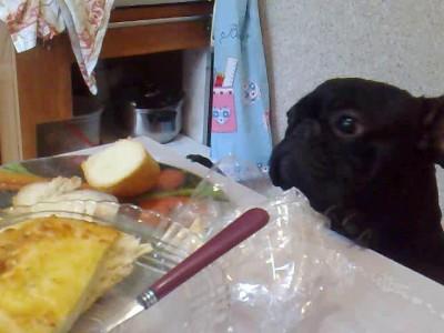 Арчи хочет кушать. Он всегда хочет кушать.